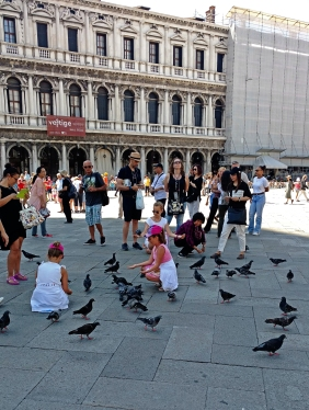 Tourists love pigeons. Amusing.