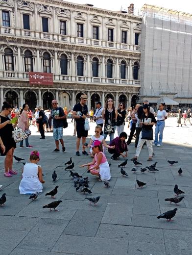 Tourists love pigeons. Amusing.