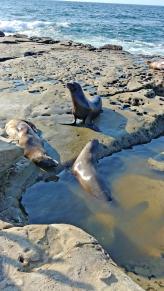 Sea lions entertain.