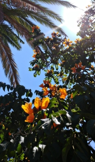 Palm trees and flowers.