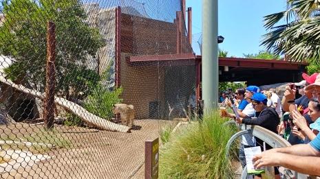 Everyone is a fan of lions.